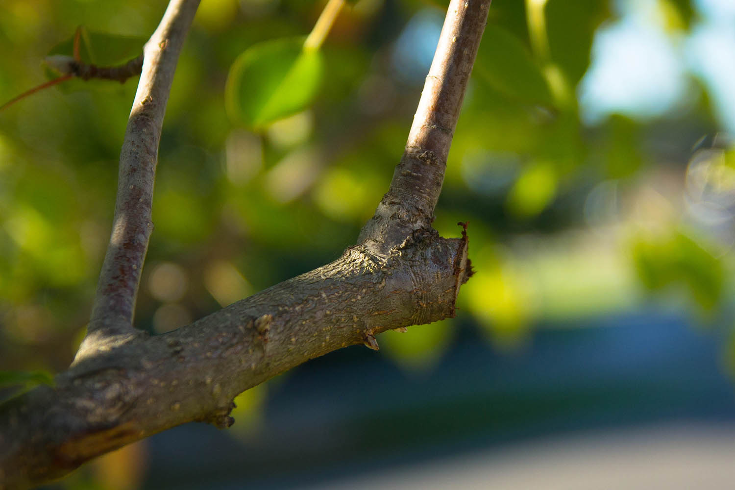 Read more about the article Tree Pruning